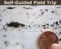 Self-Guided Field Trip