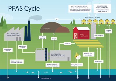 Diagram showing the storage and transport of PFAS in various terrestrial ecosystems including natural and anthropogenic influences